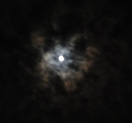 月と菊 (2)