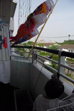 鯉のぼり2011