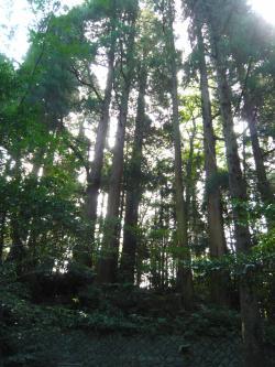 天野岩戸神社1