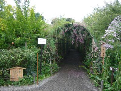 萩のトンネル入り口