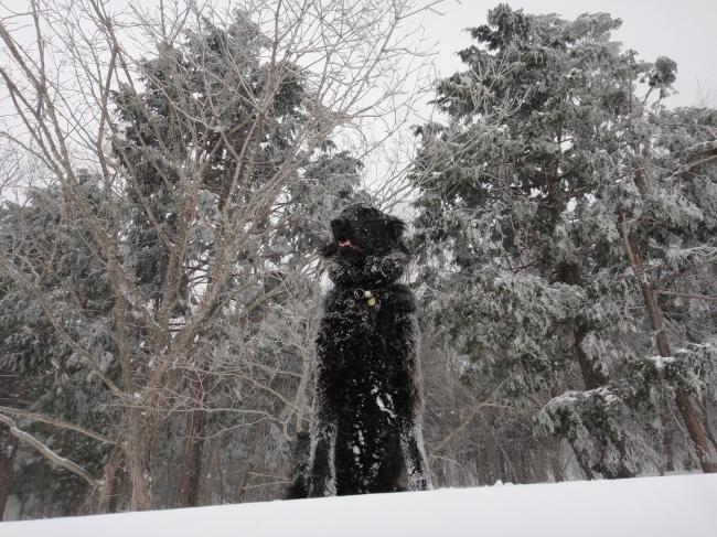 雪の林バック