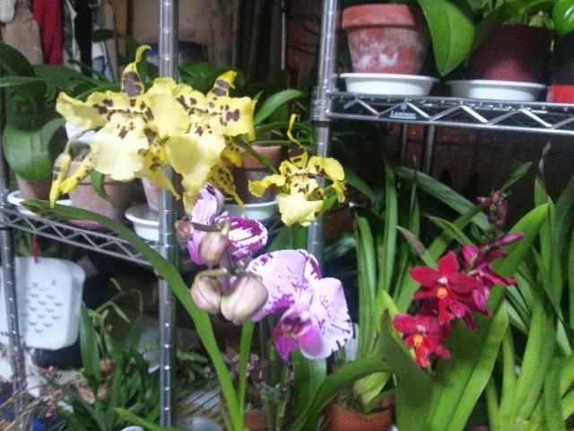 最近買った花たち