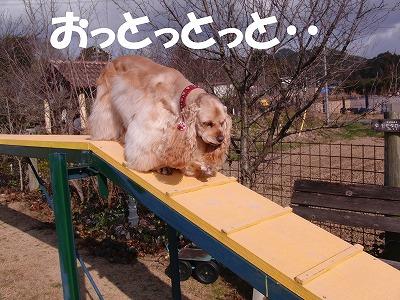 CIMG4134_sh01.jpg