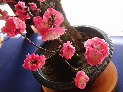 CIMG4641_20110307193918.jpg