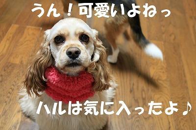 IMG_3840_sh01.jpg