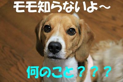 IMG_4853_sh01.jpg