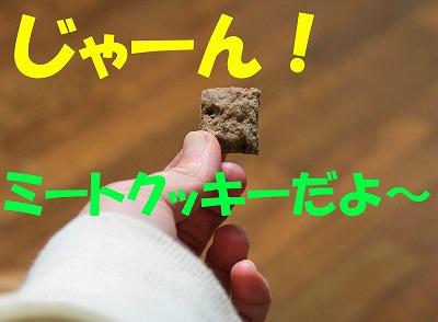 IMG_4863_sh01.jpg