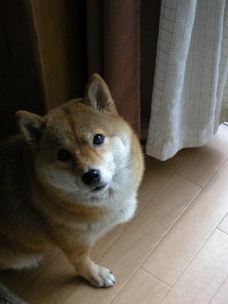 tsuki1101.jpg