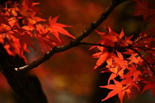 kiyomizu0511263_2.jpg