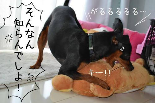 DSC_00882_convert_20110826193410.jpg