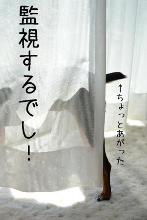 DSC_05542_convert_20110908220259.jpg