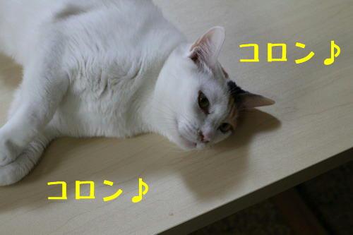 コロコロ1