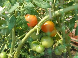 tomat100721