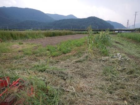 桔梗農場片付け (3)