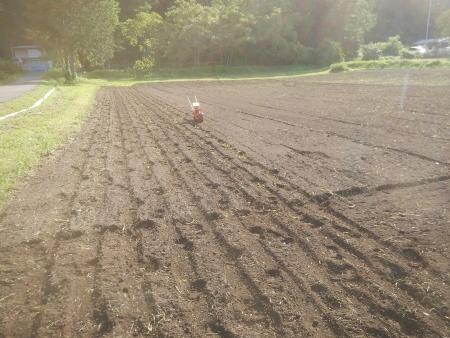 麦の種まき (2)