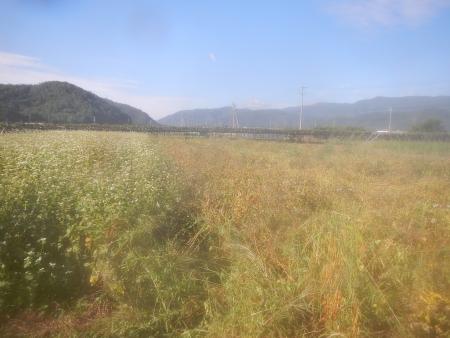 蕎麦刈 (4)