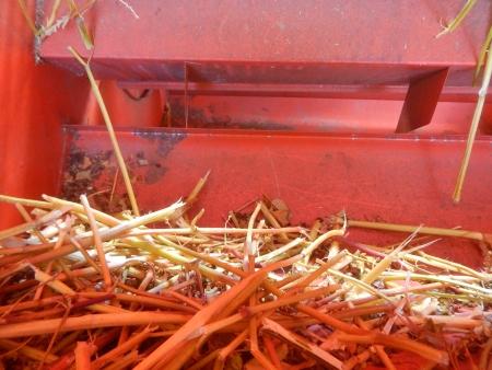 蕎麦の脱穀作業 (7)