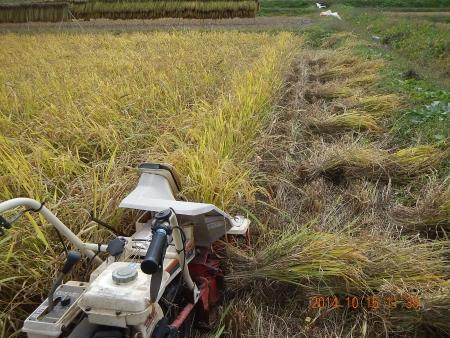 稲刈り作業 (5)