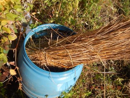 稲刈り作業 (1)