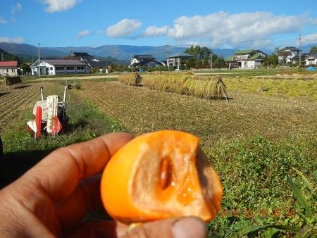 稲刈り (9)