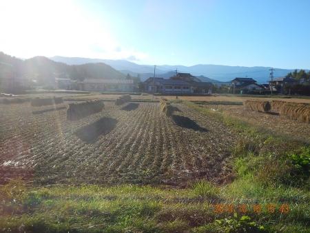 稲刈り (19)