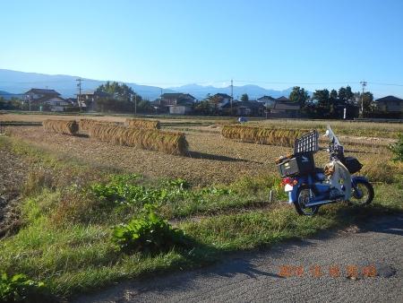 稲刈り (18)
