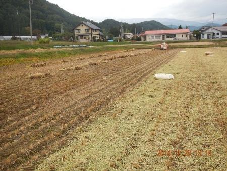 稲 脱穀作業 (5)