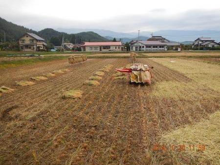 稲 脱穀作業 (4)