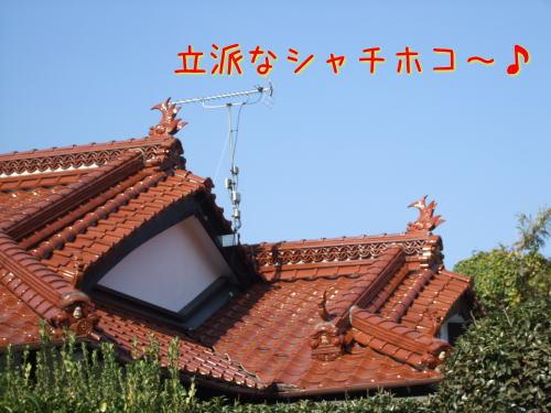 009_20101126024009.jpg