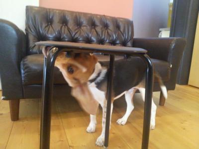 いすをがう_convert_20110116223257