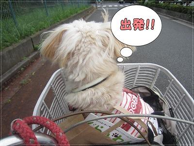 お買い物5