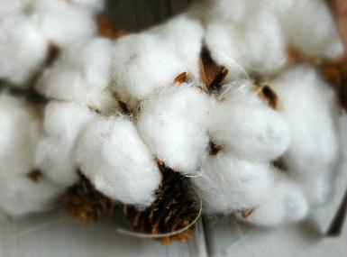 cotton-w_2.jpg