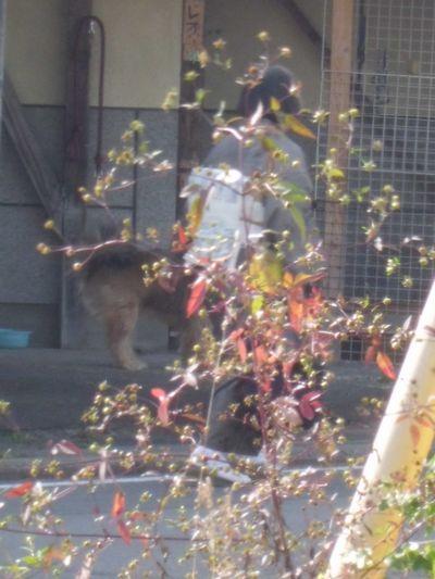 犬とお着物と植物と…