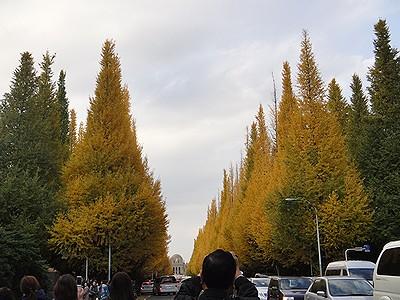 jingu201011f.jpg