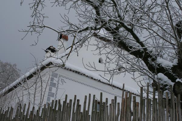 bikfalva2012jan 042