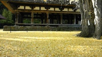 長床イチョウの絨毯 (400x224)