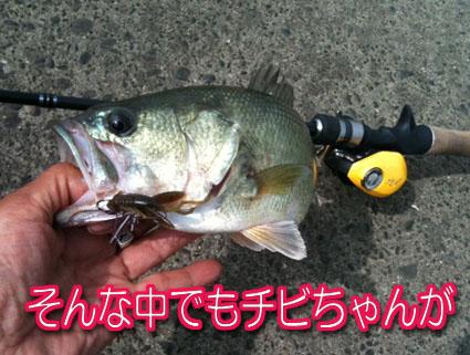 2011-07-29-3.jpg