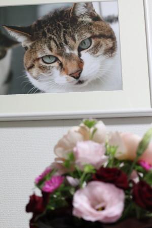 キウイと花