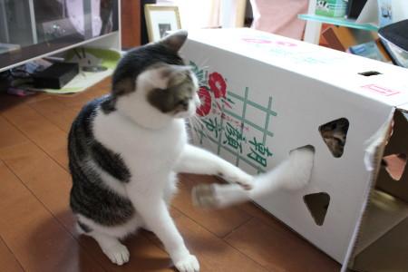 asagao box3
