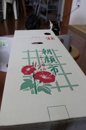 asagao box1