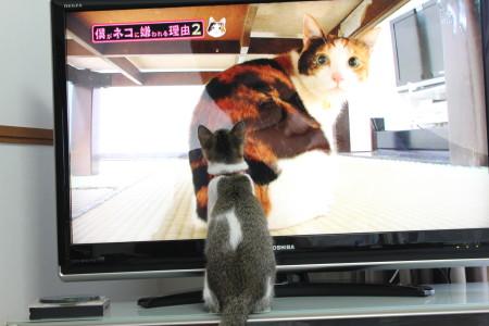 僕が猫に2