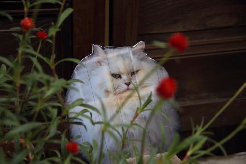 安居の猫2