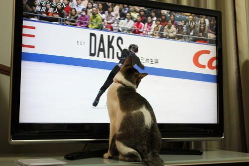 NHK杯1