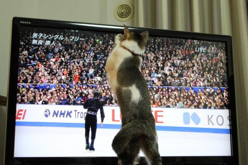 NHK杯3