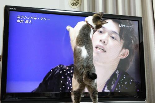 NHK杯4