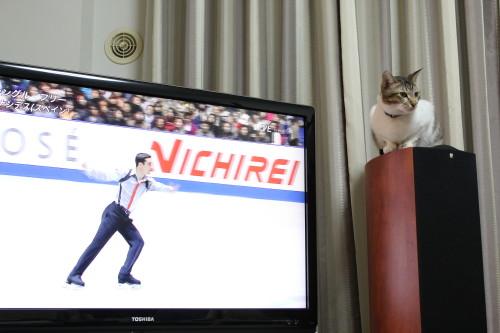 NHK杯5