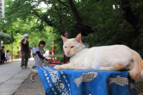 参道の猫1