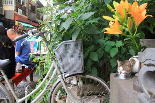 参道の猫2