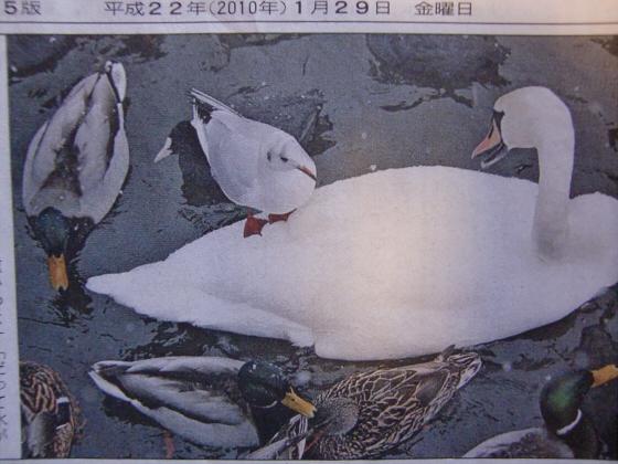 産経新聞眺めてて-2-09