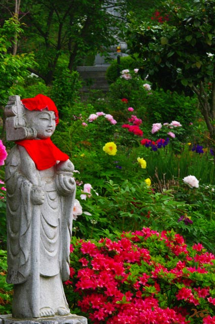 110522ぼたん祭り_龍願寺06